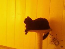 Foto 3 2 Katzen suchen ein vorübergehndes Zuhause