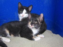 2 Katzenkinder suchen noch
