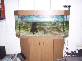 2 Kielrückenmoschusschildkröten mit Aquarium und Zubehör