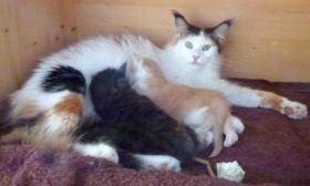 Foto 5 2 MC Mädchen, *17.11.13, geimpft, gechipt, Stammbaum, Luxpinsel