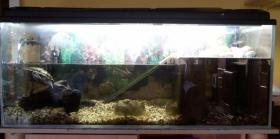 2 Mississippi H�ckerschildkr�ten + Aquarium