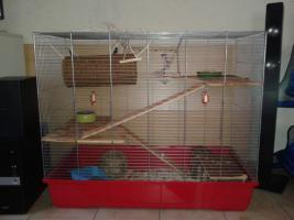 Foto 6 2 Super Süße Ratten