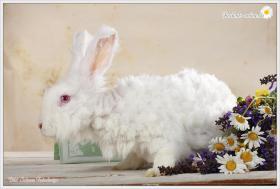 2 Superliebe Kaninchenmädels suchen neue Möhrchengeber