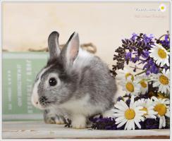 Foto 2 2 Superliebe Kaninchenmädels suchen neue Möhrchengeber