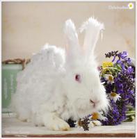 Foto 3 2 Superliebe Kaninchenmädels suchen neue Möhrchengeber
