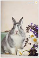Foto 4 2 Superliebe Kaninchenmädels suchen neue Möhrchengeber