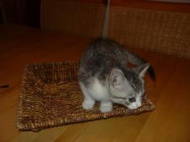 2 Whiskas Katzen suchen ein liebevolles Zuhause