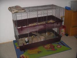 Foto 4 2 Zwergwidder Hasen + doppelstockk�fig zu verkaufen