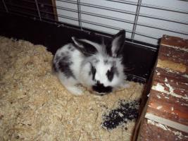 2 ganz liebe Kaninchen mit kompletter Ausstattung für innen&außen