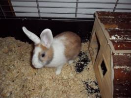 Foto 2 2 ganz liebe Kaninchen mit kompletter Ausstattung für innen&außen