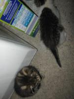 2 junge Kätzchen zu verschenken