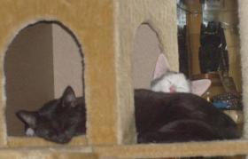 2 junge Katzen abzugeben