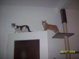 2 junge Katzendamen