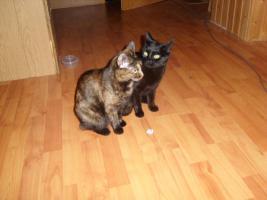 2 kastrierte liebe Haus-Katzen