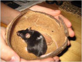 2 kleine schwarze Mäuse abzugeben