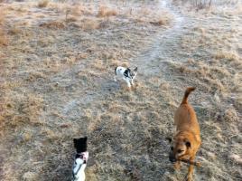 Foto 6 2 liebe Chihuahuam�dchen suchen neuen Kuschelplatz (Tierschutz)!
