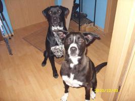 2 liebevolle Hunde dringend in liebevolle Hände abzugeben!!!