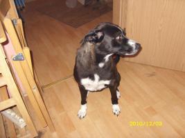 Foto 2 2 liebevolle Hunde dringend in liebevolle Hände abzugeben!!!