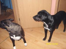 Foto 3 2 liebevolle Hunde dringend in liebevolle Hände abzugeben!!!