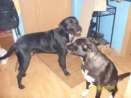Foto 4 2 liebevolle Hunde dringend in liebevolle Hände abzugeben!!!