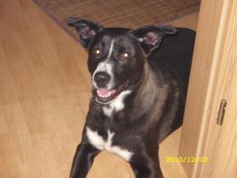 Foto 5 2 liebevolle Hunde dringend in liebevolle Hände abzugeben!!!
