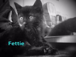 Foto 3 2 schwarze Katzenbabys (Brüder ) zu verkaufen