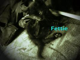 Foto 4 2 schwarze Katzenbabys (Brüder ) zu verkaufen