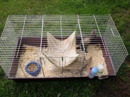 Foto 6 2 süße Frettchen mit käfig suchen ganz dringend neues zuhause