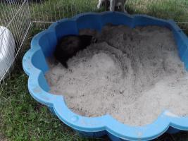 Foto 9 2 süße Frettchen mit käfig suchen ganz dringend neues zuhause