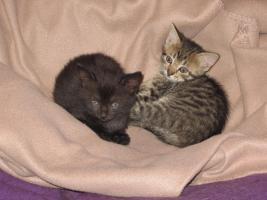 2 süße Katzenbabys