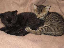 Foto 2 2 süße Katzenbabys