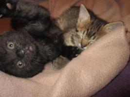 Foto 3 2 süße Katzenbabys