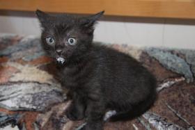2 süße Kitten suchen neues zuhause
