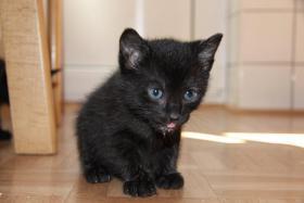 Foto 2 2 süße Kitten suchen neues zuhause