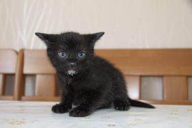 Foto 3 2 süße Kitten suchen neues zuhause
