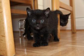 Foto 4 2 süße Kitten suchen neues zuhause