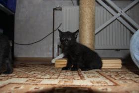 Foto 5 2 süße Kitten suchen neues zuhause