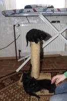 Foto 6 2 süße Kitten suchen neues zuhause