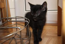 Foto 7 2 süße Kitten suchen neues zuhause