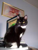 Foto 8 2 s��e Kitten suchen neues zuhause