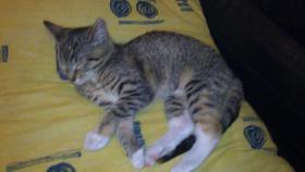 2 süße junge katzen !!!