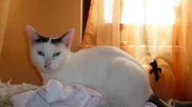 Foto 2 2 süße katzen suchen ein neues zuhause