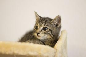 2 s e kleine baby katzen zu vergeben in frankfurt zu. Black Bedroom Furniture Sets. Home Design Ideas