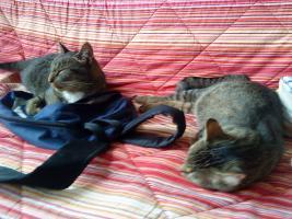 2 super süße Hauskatzen in liebevolle Hände abzugeben (zu verschenken)