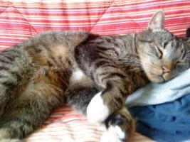 Foto 3 2 super süße Hauskatzen in liebevolle Hände abzugeben (zu verschenken)