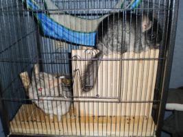 Foto 2 2 verschmuste Böcke suchen liebes zu Hause
