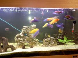 Foto 9 200 Liter Juwel Aquarium mit Unterschrank, Fischen und Zubehör!