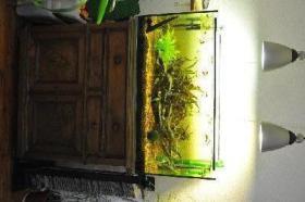 Foto 2 200 l Aquarium komplett mit Fischen