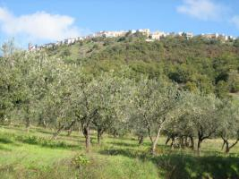 220 Olivenbäume mit 13010qm Grundstück Italien