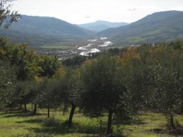 Foto 2 220 Olivenbäume mit 13010qm Grundstück Italien